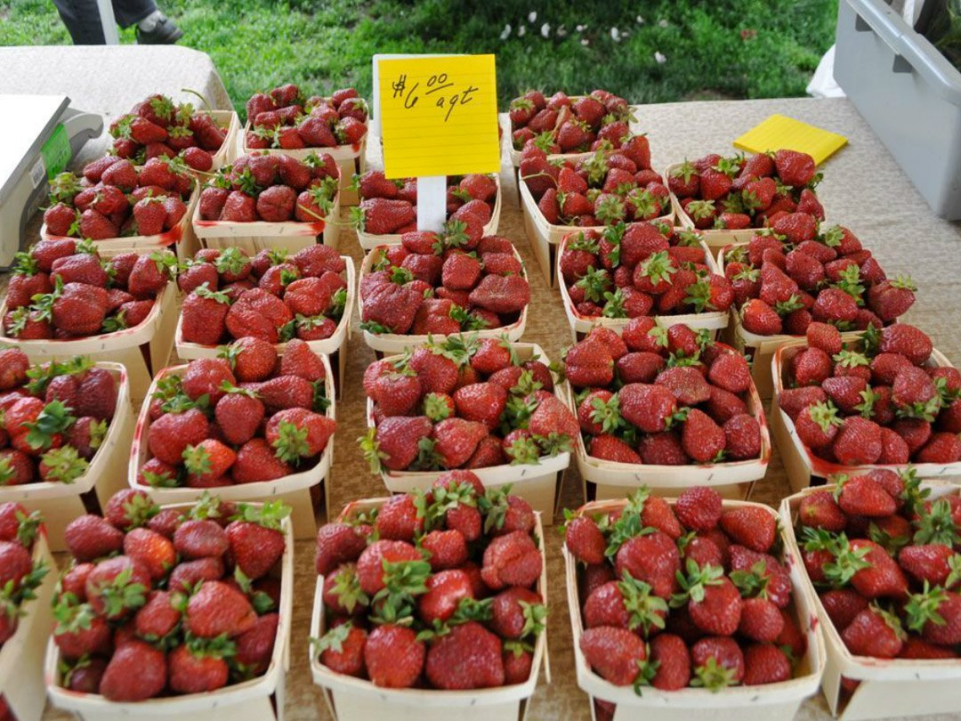 Rose Park Farmers Market - table full of cartons over flowing with ripe strawberries