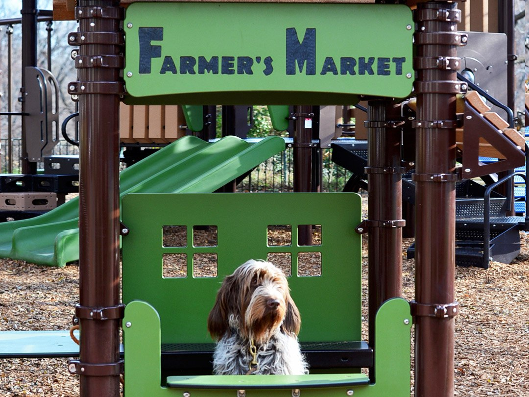 A dog sits inside of the Rose Park play ground under a sign that reads Farmers Market